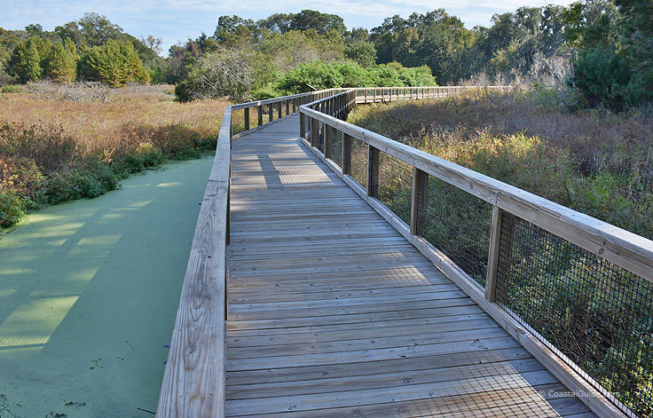 Cypress Wetlands boardwalk is a great place to see alligators