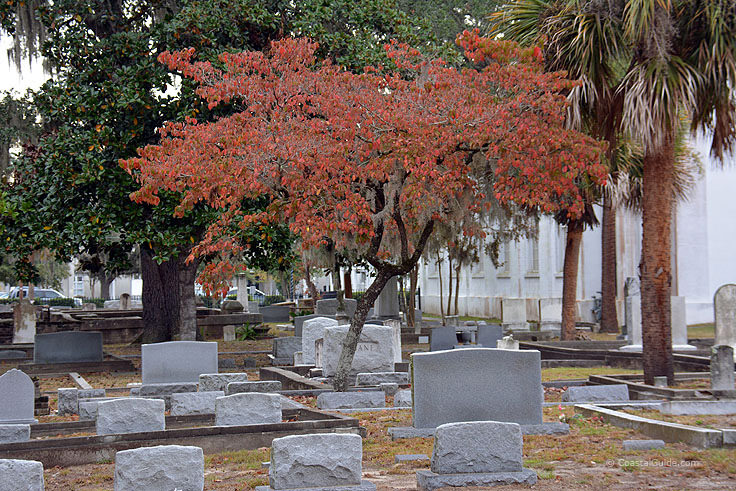 Cemetery outside St. Helena's in Beaufort SC